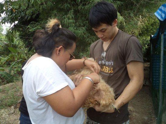 helping abandon puppies