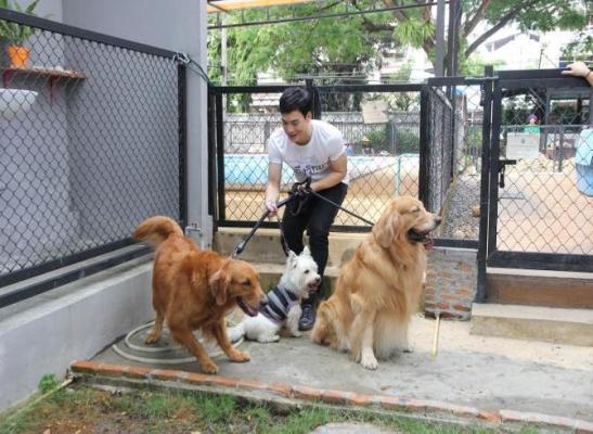 Bie as dog sitter :))