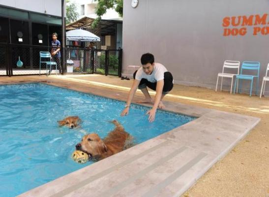 swim!